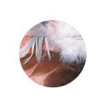 Plume décorative 3-10cm sachet de 10 assorties - Brun
